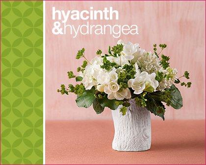 martha stewart 1-800-flowers hyacinth