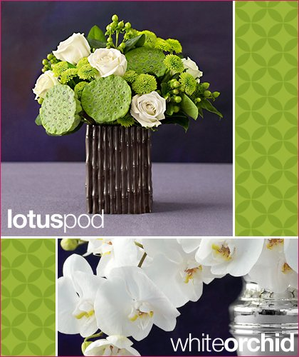 martha stewart 1-800-flowers lotus pod
