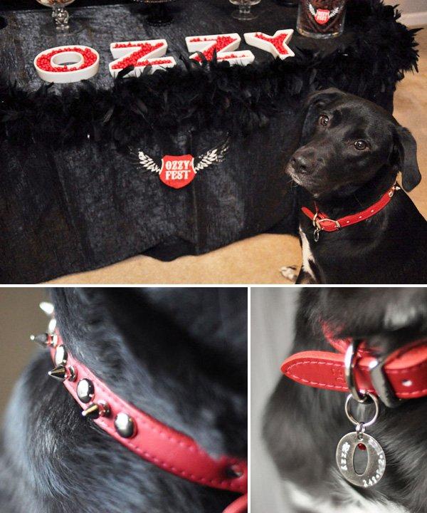 glam rockstar doggie birthday party