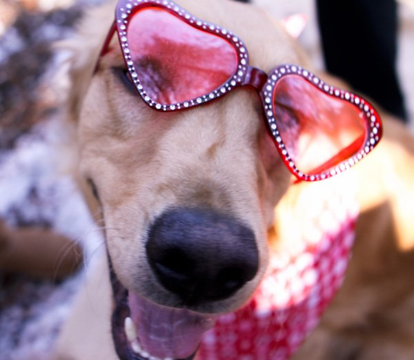 Puppy Love Doggy Valentine's Day Party