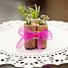 Wine Cork Succulents DIY (5)