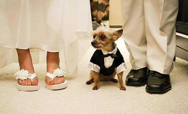 wedding photo with a dog in a tuxedo