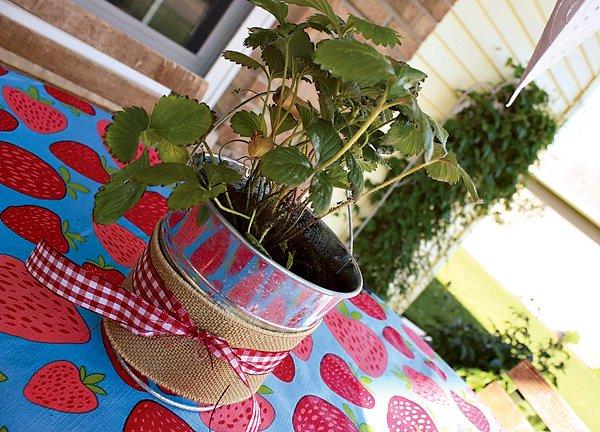 Burlap Plant Centerpieces
