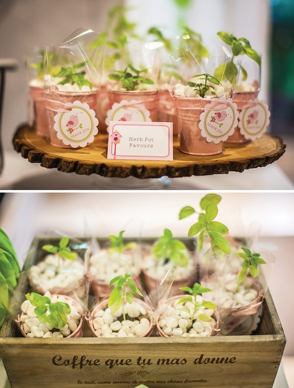Pink herb pots with white stones and basil for party favors
