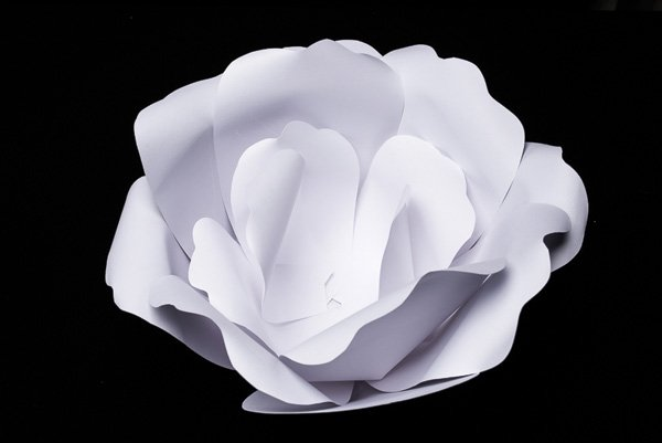 DIY Large Paper Flowers Tutorial