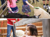 birthday party petting zoo