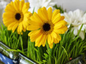 gerber daisy and grass table centerpiece