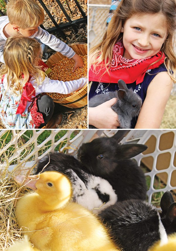 birthday party baby animals petting zoo