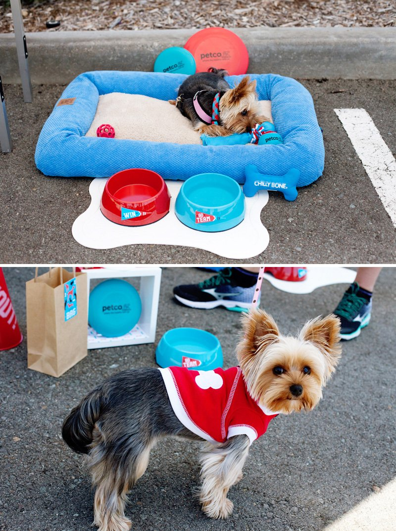 24_dog-friendly-tailgate