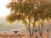 fall vineyard wedding tables