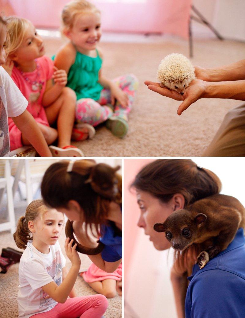 Wild Wonders Animal Visit - Hedgehog and Kinkajou