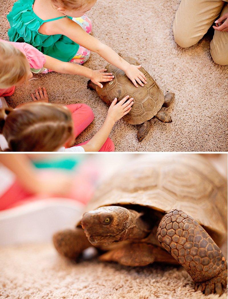 Wild Wonders Animal Visit - Turtles