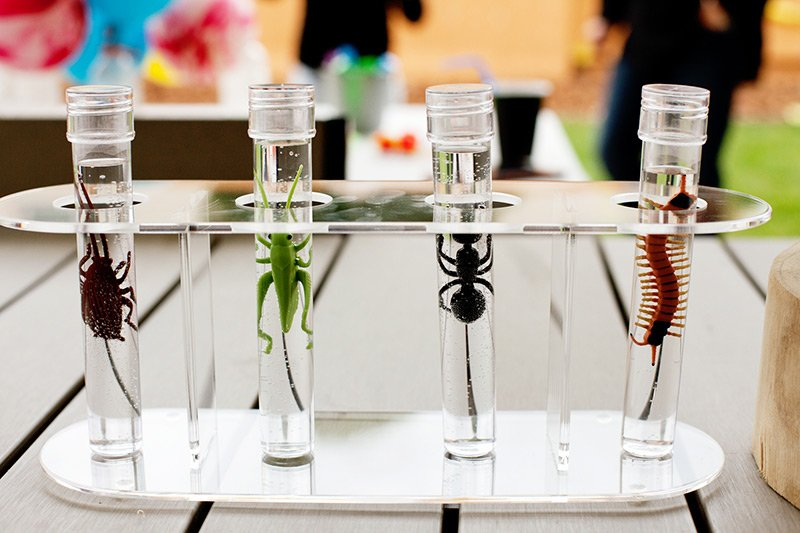 science party bug specimen decorations